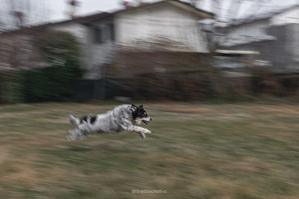 fotografia di un cane che corre sollevato da terra con tutte e quattro le zampe, un preato verde e una casa bianca sullo sfondo, la fotografia ha lo sfondo mosso ma la parte anteriore del cane è perfettamente a fuoco e ferma dando una sensazione di movimento che rende perfettamente la corsa del cane