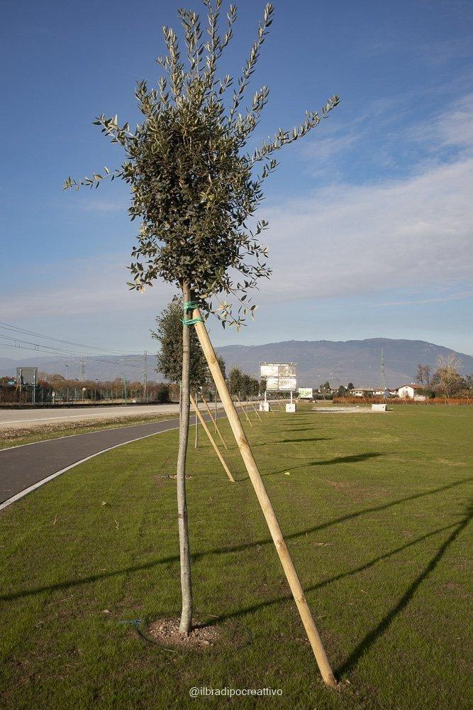 foto di un albero piccolo sorretto da un palo, tronco e palo formano un triangolo